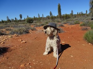Bailey admires the view, on the road to Uluru