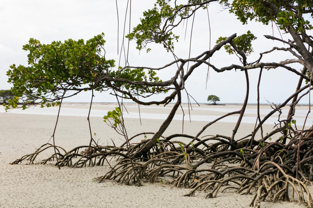 Cowie Beach-4509
