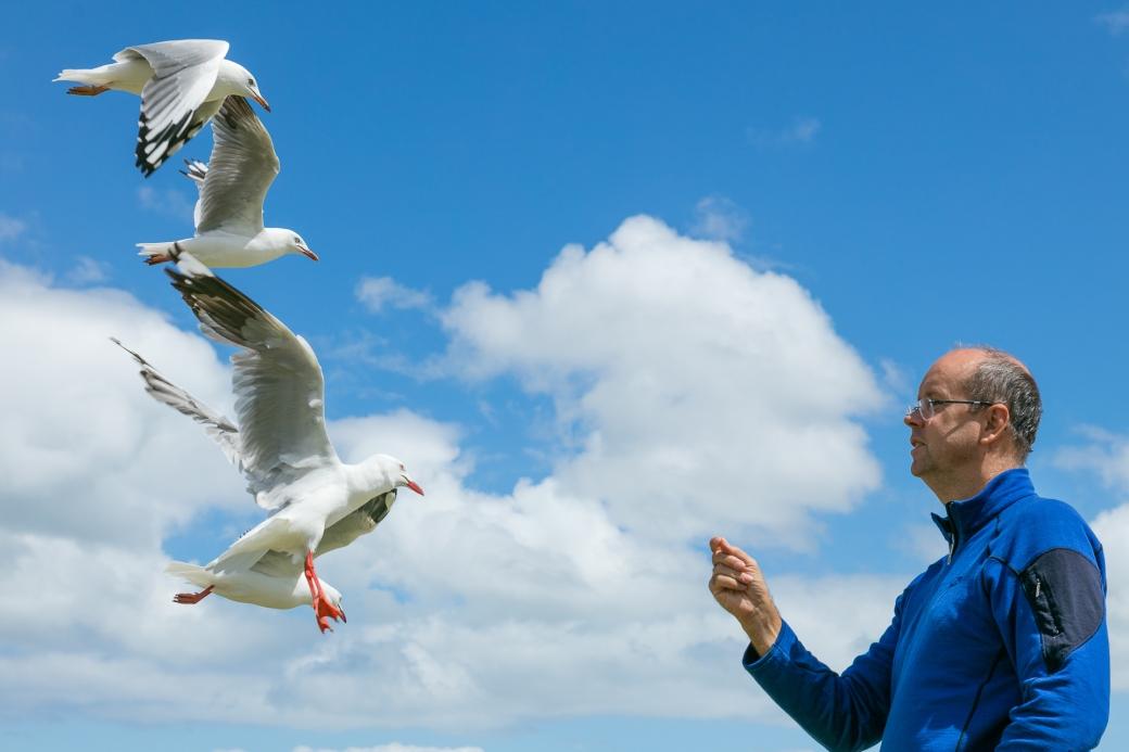 gippsland-seagull-2