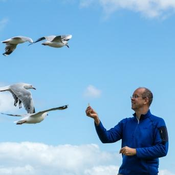gippsland-seagull-3