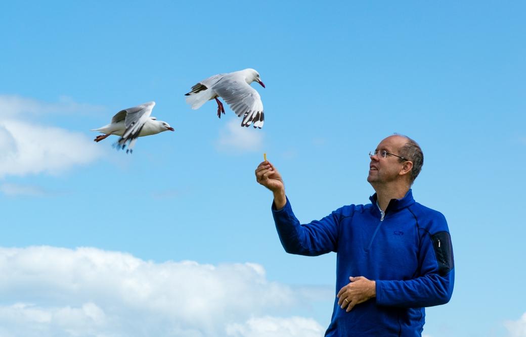 gippsland-seagull-5