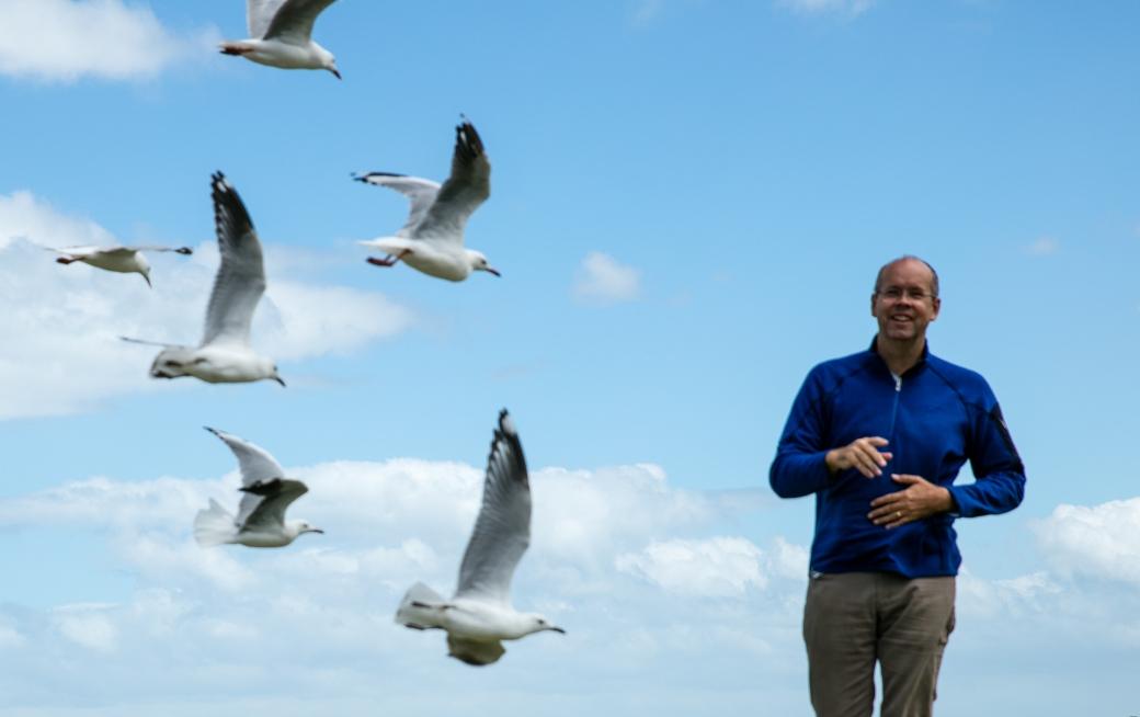 gippsland-seagull-6